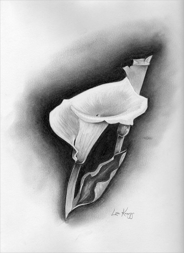 calla lily flower drawing