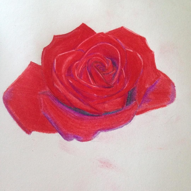 red rose flower drawing