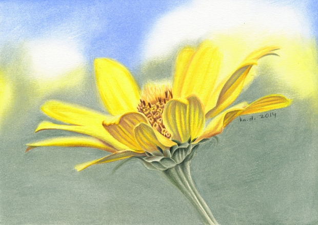 Wild Flower Colored Pencil Drawing