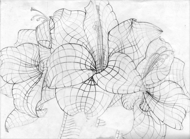 Passion Flower Line Drawing : Flower drawings sketches design trends premium