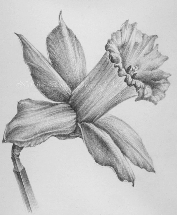Spring flower pencil drawing