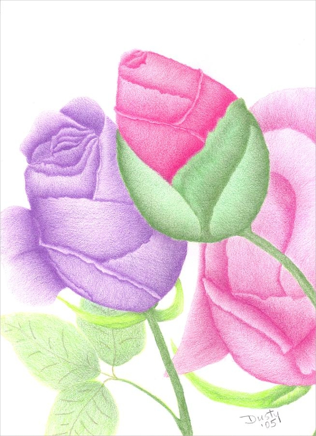 Colorful Rose Bud Drawing