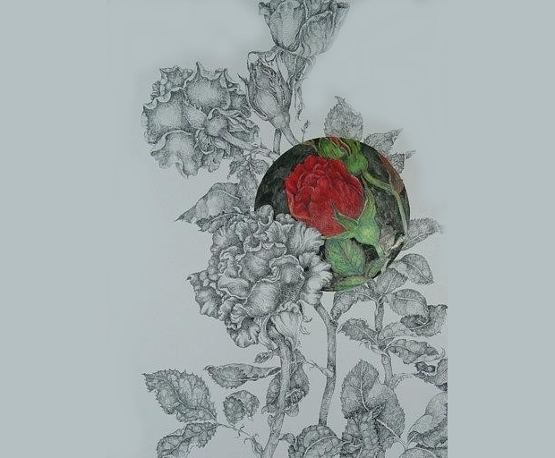 Rose Bush with Thorns Drawing