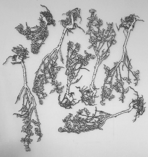 rose bush pencil drawing