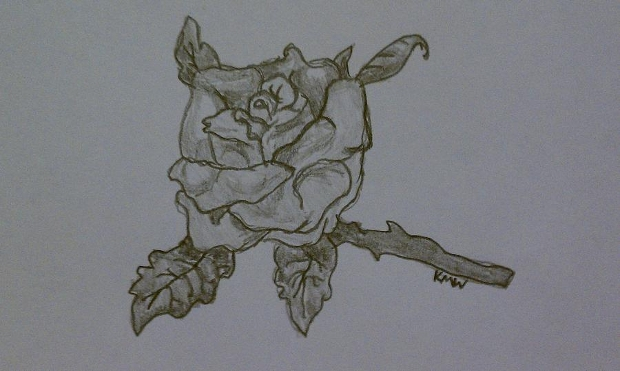 Open Rose Pencil Drawing