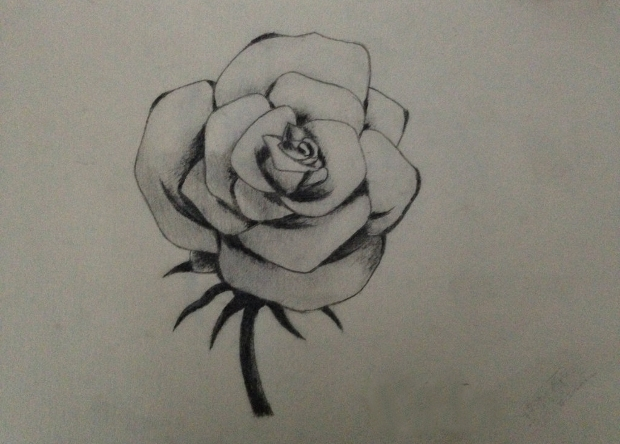 Open Rose Sketch Drawing