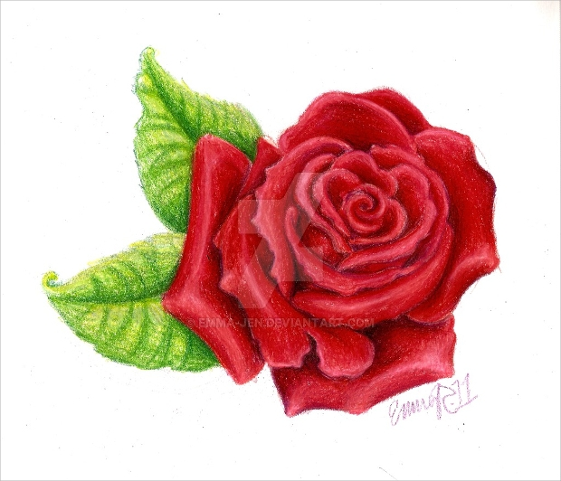 Small Red Rose Drawing