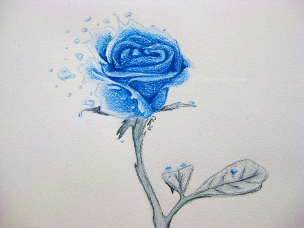 Small Blue Rose Drawing
