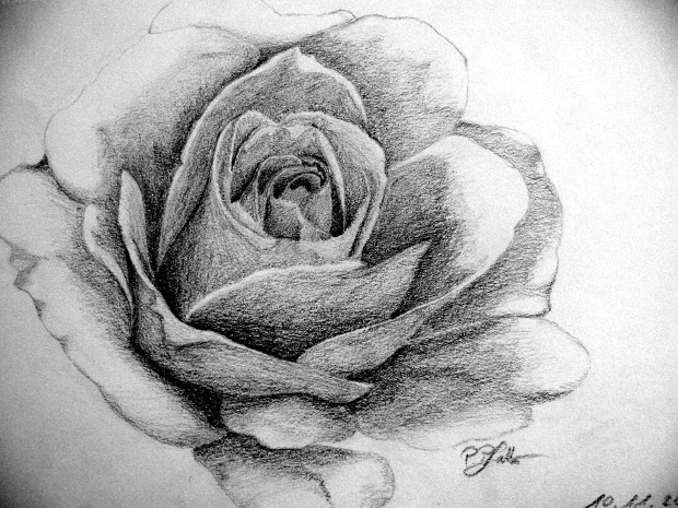 Black and White Rose Pencil Drawing