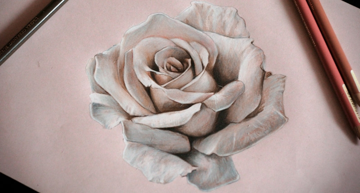 20 Rose Drawings Sketches Design Trends Premium Psd