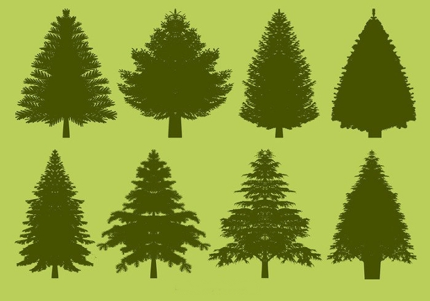 pine tree silhouette1