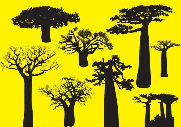 baobab tree silhouette