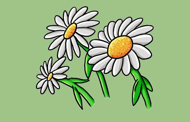 Daisy Flower Clipart