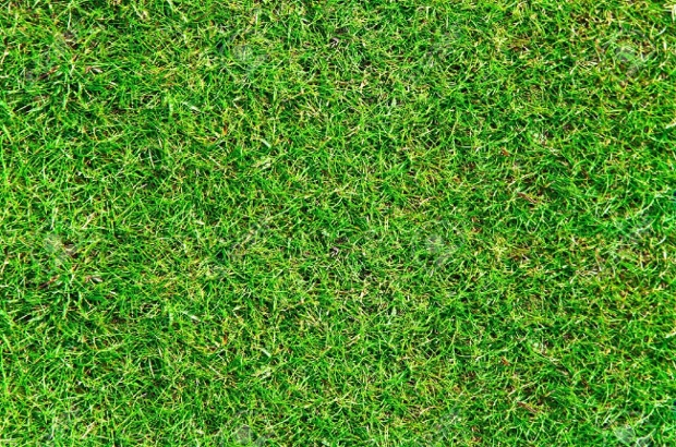 high resolution grass texture