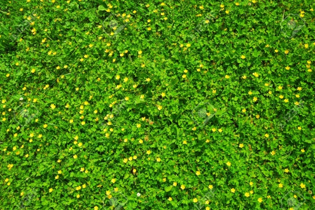 spring green grass texture