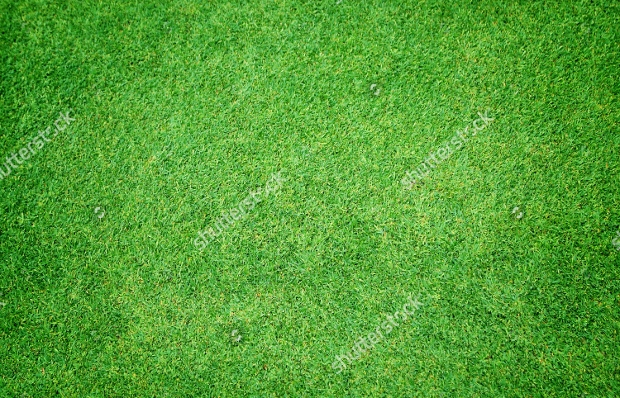 natural green grass texture