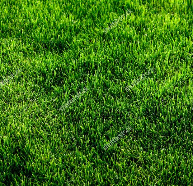 soccer field grass texture