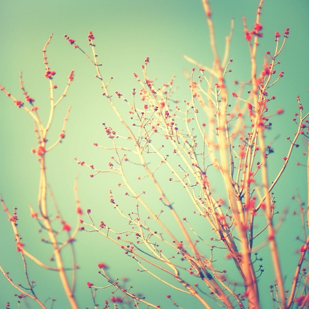 Spring Tree Photography