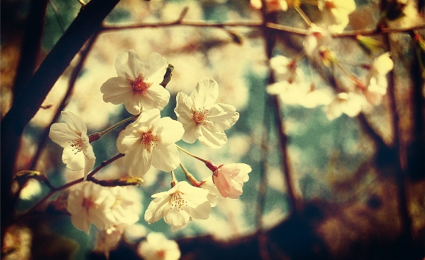 Vintage Spring Photography