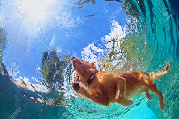 Underwater Pet Photography