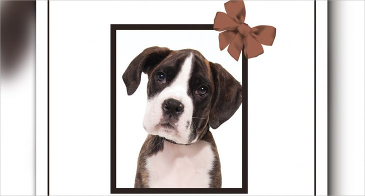 5 Pet Memorial Card Template Word Psd Pages Publisher Ai