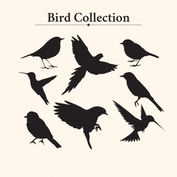 vintage bird silhouette
