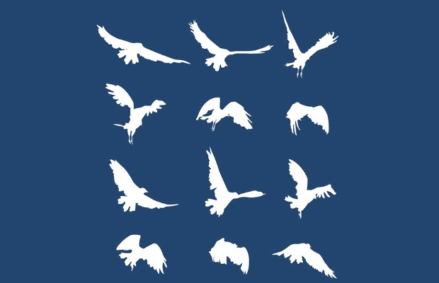 Bird Sequence Silhouette