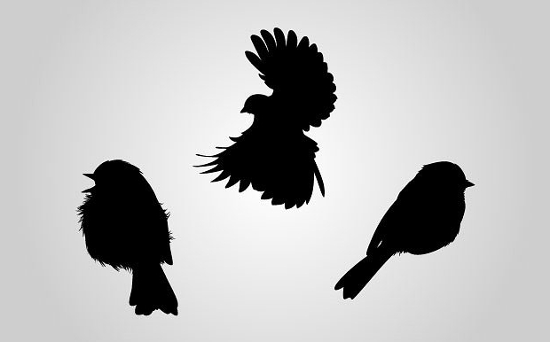 High Quality Bird Silhouette