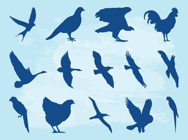 wild birds silhouette design