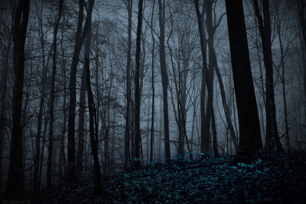 Night Forest Photography