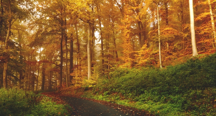 15 Nature Photography Design Trends Premium Psd Vector Downloads