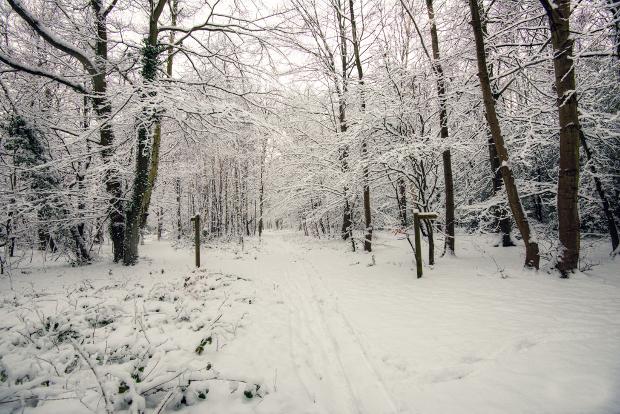 Snow Landscape Photography