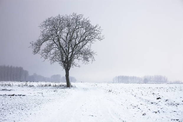 Winter Snow Landscape Photography