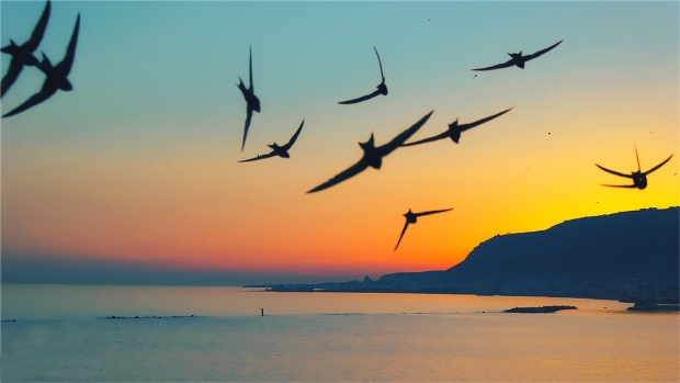 flying bird photography