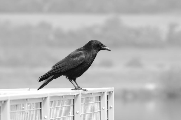 black and white bird photography