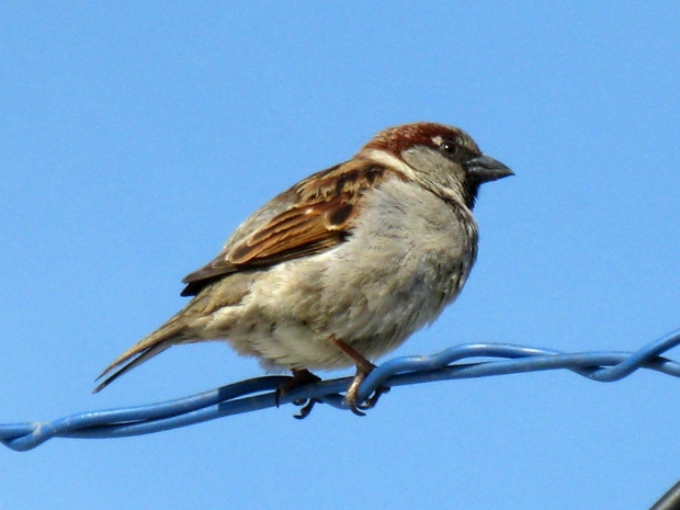 bird on a wire photography