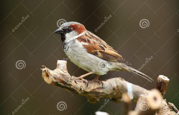 sparrow bird photography