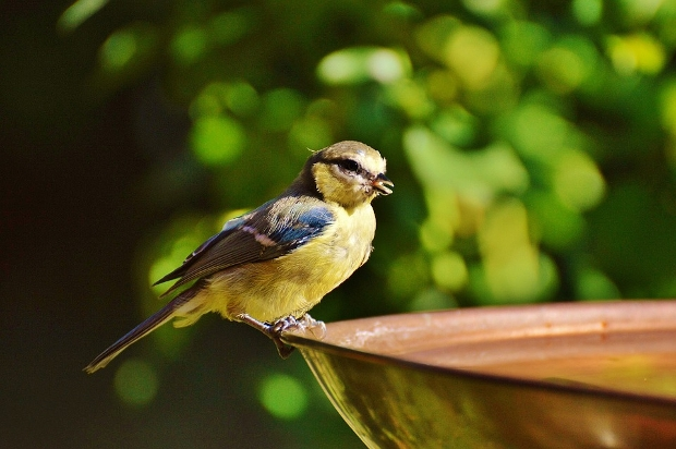 small cute bird photography