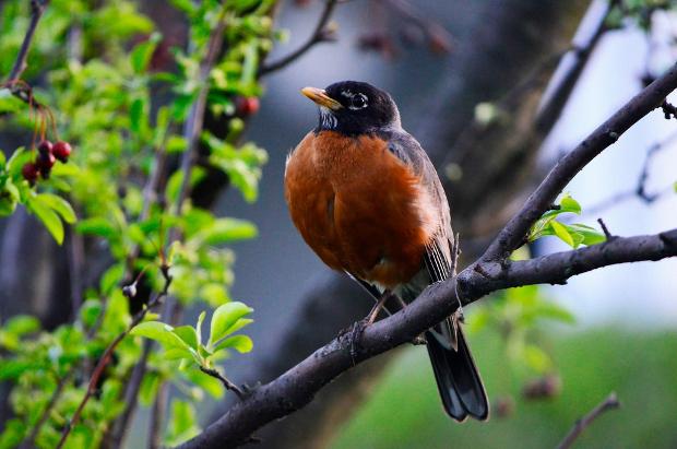 robbin bird photography
