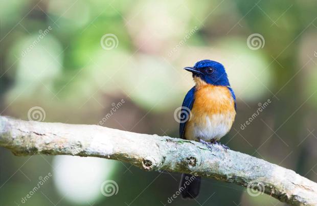 cute blue bird photography