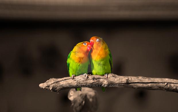 love bird photography1
