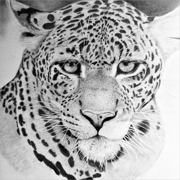 realistic animal drawing