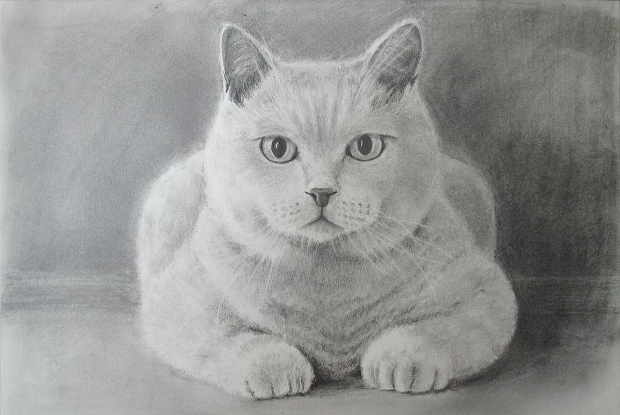 pet animal drawing