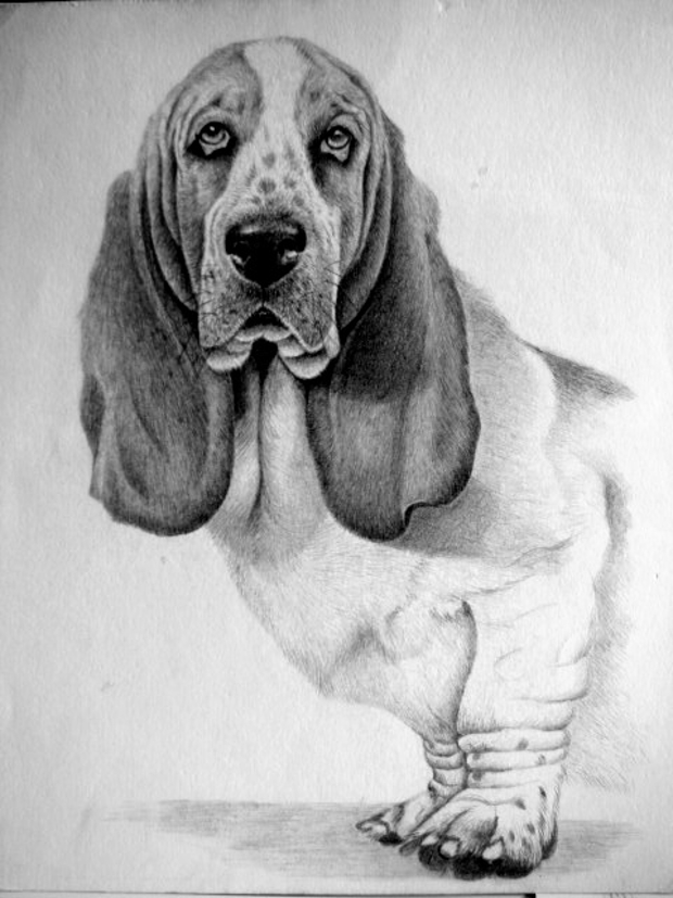 animal dog drawing