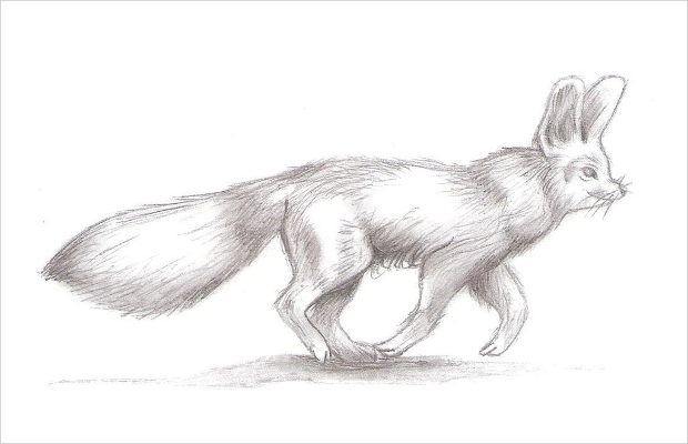 animal fox drawing