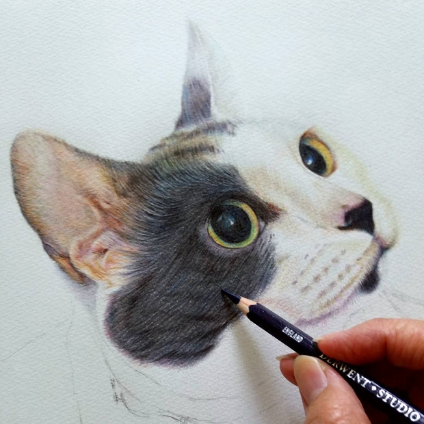 colorful animal cat drawing