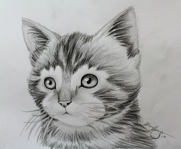 animal kitten drawing