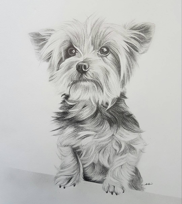 animal portrait drawing