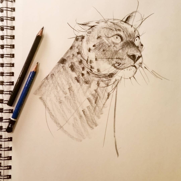 animal leopard drawing