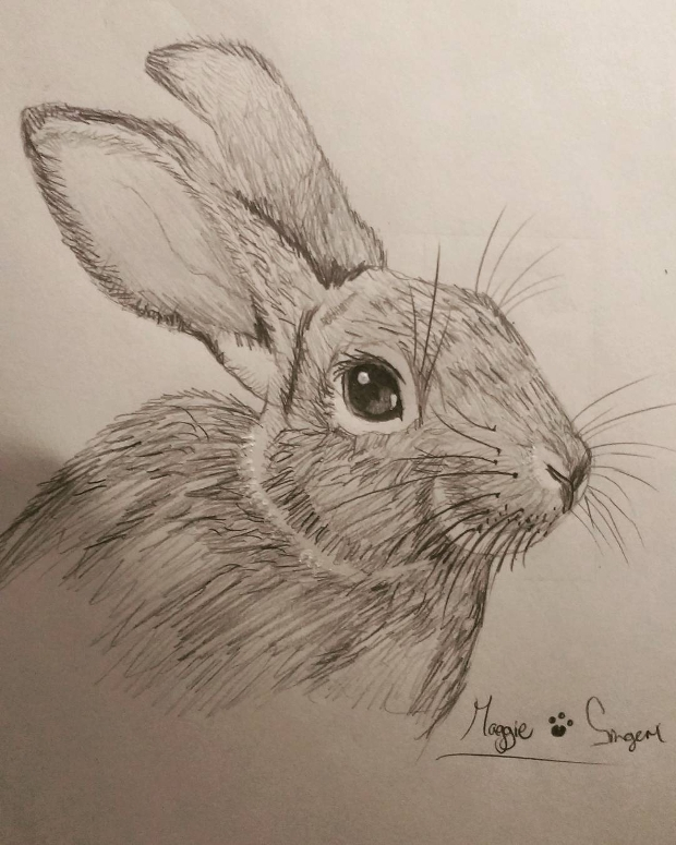 animal rabbit pencil drawing